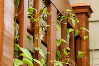 Build a DIY Trellis in a Weekend